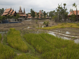 Rice Paddies and a Nearby Housing Development Photographic Print by Karen Kasmauski