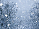 Snow Falling on Trees at Dusk Photographic Print by Brian Gordon Green
