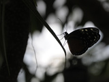 A Butterfly Alighted on a Frond Photographic Print by Stephanie Lane