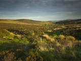 A Moorland Landscape on Dartmoor, Devon, Great Britain Photographic Print by Nigel Hicks