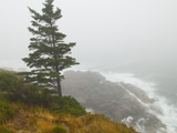A Lone Pine Tree on a Cliff on a Foggy Coast Photographic Print by Karen Kasmauski