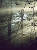 Sunlight Streaming Through Morning Fog in a Forest Photographic Print by Bates Littlehales