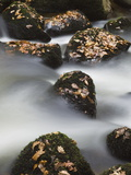 The Bovey River Flowing Through Lustleigh Cleave, Dartmoor Photographic Print by Nigel Hicks