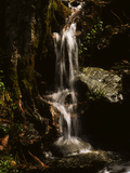 A Small Vernal Waterfall Cascading over Rocks Photographic Print by Bates Littlehales