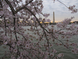Cherry Blossoms at the Tidal Basin in Washington D.C Photographic Print by Karen Kasmauski