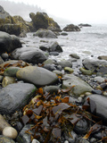 Seaweed Among Stones on a Rocky Shore with Gentle Surf Photographic Print by Anne Keiser
