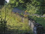 Stone Walls Built by Itinerant Irish Masons Line Maple Grove Road Photographic Print by Steve Raymer