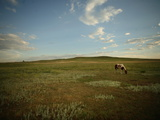 A Horse Grazing on the Edge of the Town of Pine Ridge Photographic Print by Aaron Huey