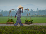 A Vietnamese Farmer Carrying a Load of Vegetables Photographic Print by Karen Kasmauski
