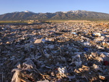 Salt Lake City's Garbage Dump on the Skull Valley Indian Reservation Photographic Print by Aaron Huey