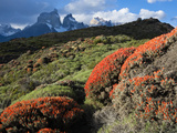 Arid Pre-Andean Shrubland in Torres Del Paine National Park Photographic Print by Maria Stenzel