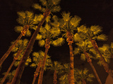 A Stand of Palm Trees Seen from Below at Night Photographic Print by Karen Kasmauski