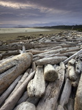 Driftwood on the Beach in Pacific Rim National Park Photographic Print by Aaron Huey