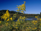 Scenic View of Goldenrod Flowers and Waterways Fotografisk tryk af Raymond Gehman