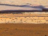Close-Up of Surf on Wrightsville Beach at Sunrise Photographic Print by Brian Gordon Green