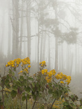 Blooming Shrubs and Trees in a Foggy Forest Photographic Print by Karen Kasmauski