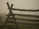 Morning Fog and a Civil War Split-Rail Fence Frame Wild Deer Photographic Print by Stephen St. John