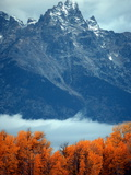 Fall Colors in Grand Teton National Park Photographic Print by Aaron Huey