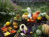 Vegetable Varieties at the Seed Savers Exchange Photographic Print by Jim Richardson