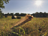 A Wild Turkey Tailfeather in a Field Along Historic Maple Grove Road Photographic Print by Steve Raymer