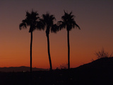 Palm Trees at Sunset Photographic Print by Karen Kasmauski