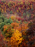 Trees in Autumn Hues on a Mountain Side Photographic Print by Bates Littlehales