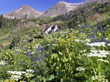 Wildflowers and Waterfall at Yankee Boy Basin Colorado Stampa fotografica di Robbie George