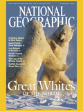 Cover of the February, 2004 Issue of National Geographic Magazine Lámina fotográfica por Norbert Rosing
