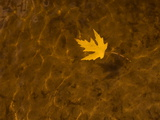 A Leaf Floating on Water Photographic Print by Aaron Huey