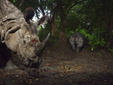 A Camera Trap Captures a Bloodied Indian One-Horned Rhino Photographic Print by Steve Winter