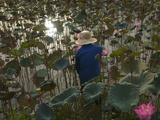 A Vietnamese Person Wading in a Lotus Water Lily Pond Photographic Print by Karen Kasmauski