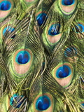 Close Up Male Indian Peacock Feathers, Pavo Cristatus Photographic Print by Paul Sutherland