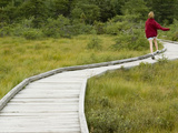 Walking on Path Through a Bog at Cape Breton Highlands National Park Photographic Print by Karen Kasmauski