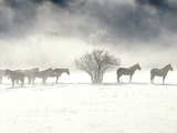 Horses on a Snowy Day in Colorado Photographic Print by Robbie George