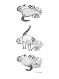 Group of gourds. One of them stretches to reveal that it is a cat. - New Yorker Cartoon Premium Giclee Print by Danny Shanahan