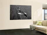 A P-51C Mustang in Flight Wall Mural by  Stocktrek Images