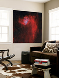 The Flaming Star Nebula Wall Mural by  Stocktrek Images