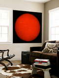 H-Alpha Full Sun in Red Color with Active Areas and Filaments Wall Mural by  Stocktrek Images