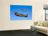 A P-40E Warhawk and a P-51D Mustang Kimberly Kaye in Flight Wall Mural by  Stocktrek Images