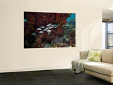 School of Gray Snapper Amongst a Colorful Reef Wall Mural by  Stocktrek Images