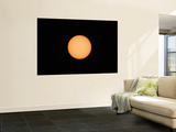 Sunspots on the Sun's Surface Wall Mural by  Stocktrek Images