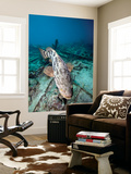 A Goliath Grouper Effortlessly Floats over a Shipwreck Off the Coast Key Largo, Florida Wall Mural by  Stocktrek Images
