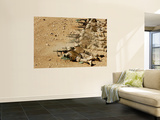 U.S. Navy Seabees Fire M-4 and M-16A2 Rifles Wall Mural by  Stocktrek Images