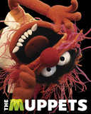 The Muppets-Animal Posters