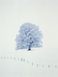 Tree in winter Photographic Print by Herbert Kehrer