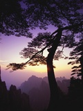 Huangshan Pine in the Huangshan Mountains Photographic Print by Frank Lukasseck