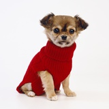 Puppy in Sweater Photographic Print by Pat Doyle