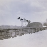 Two dogs standing on a wall looking observant Photographic Print by M. Neugebauer