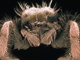 Microscopic View of Spider Photographic Print by Jim Zuckerman