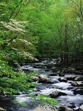 Stream in Lush Forest 写真プリント : ロン・ワッツ